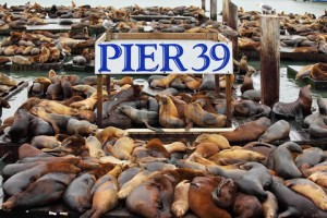 The well-known Pier 39 in San Francisco